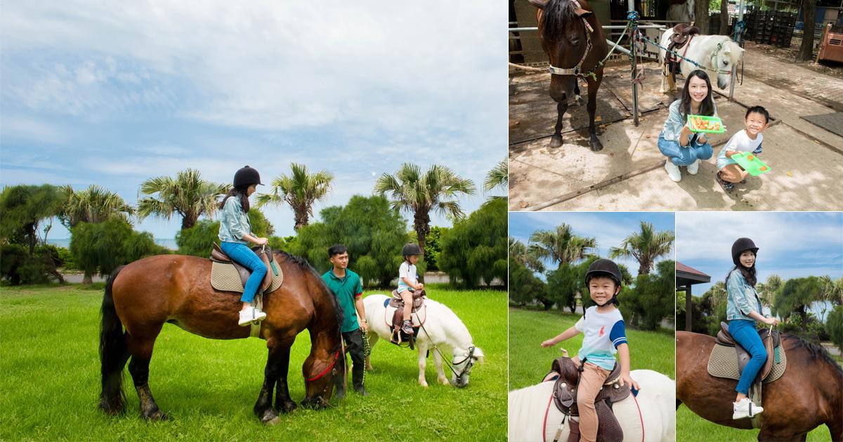 【台南景點】騎乘馬匹漫步草原及海邊|體驗英式馬術騎馬快感|餵食動物|免費參觀~~台南市立馬術場