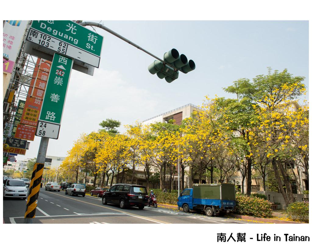 【台南市東區-花木】崇善路上的 # 黃風鈴木 #