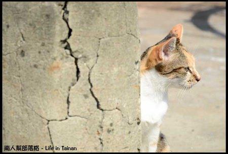 台鹼宿舍(貓)-08.jpg