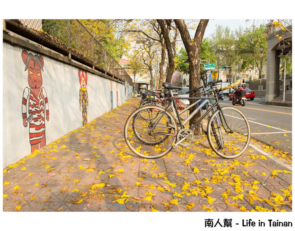 【台南市中西區-花木】南寧街上的# 黃風鈴木 #