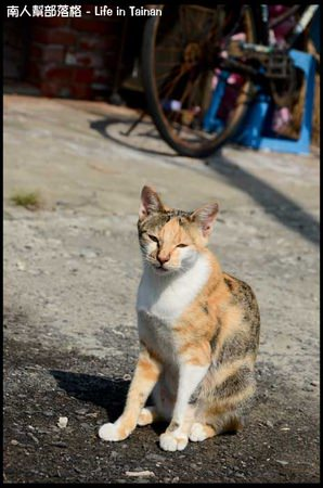 台鹼宿舍(貓)-05.jpg