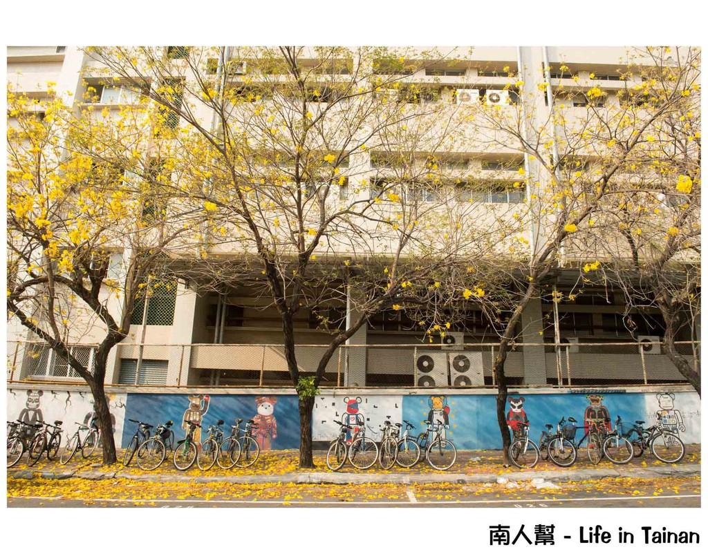南寧街黃風鈴木