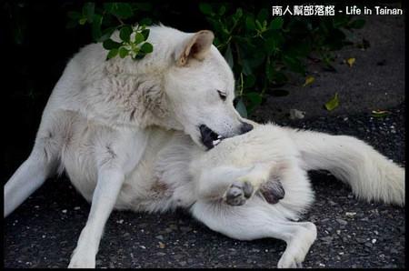 台鹼宿舍(狗)-01.jpg