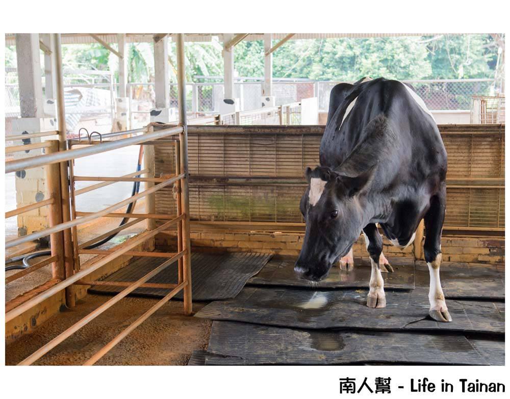 八老爺車站-乳牛的家