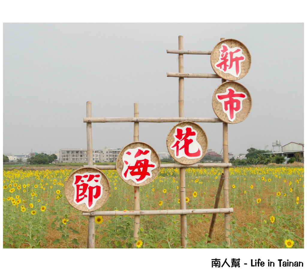 【台南市新市區-活動】賞花囉 #2014新市花海節#