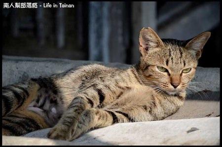 台鹼宿舍(貓)-10.jpg