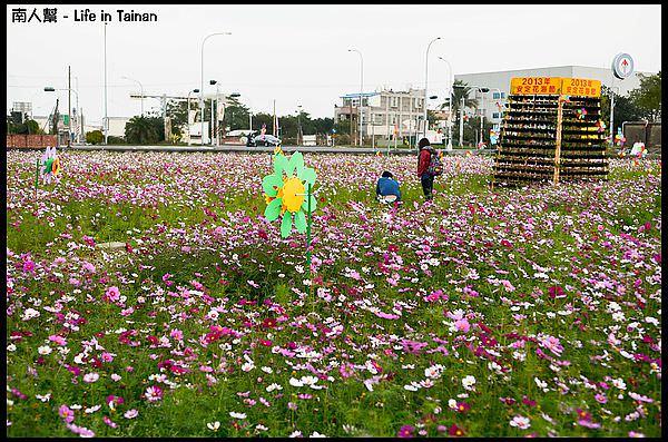 【台南市安定區-活動】2013安定花海節