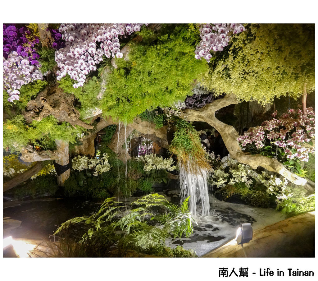 【台南市後壁區-活動】一年一度重大蘭花盛會 # 2015臺灣國際蘭展 #