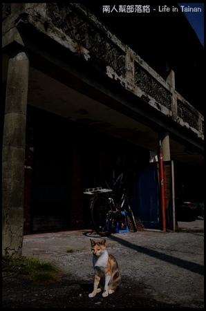 台鹼宿舍(貓)-06.jpg
