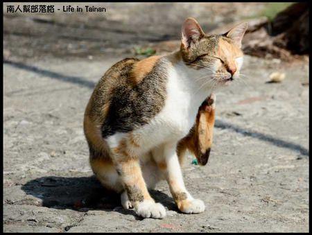 台鹼宿舍(貓)-03.jpg
